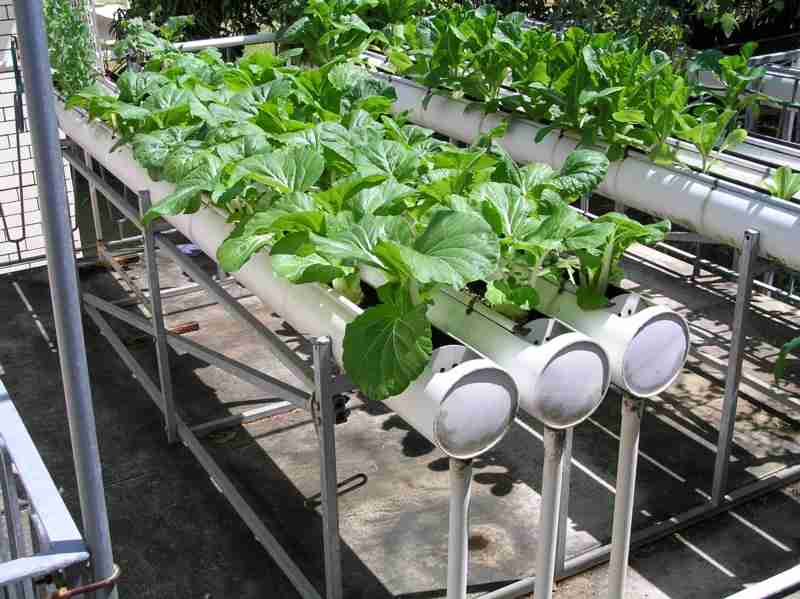 Hydroponic system (hydro alarms) materials needed for plant growth and water will be provided. And a variety of fruits and vegetables without soil and using only the specific systems of irrigation, produced